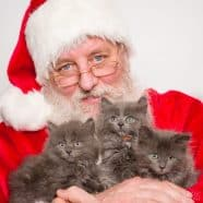Santa Bob with Cat