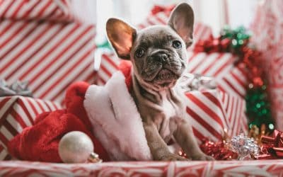 Tips for Dealing with Pets on your Visit with Santa