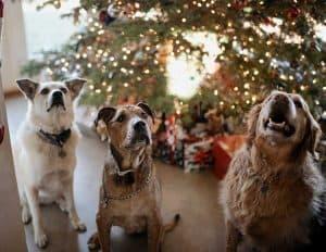 xmas dogs