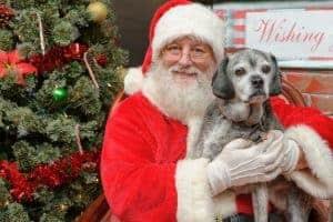 Santa & Buddy Delta BC